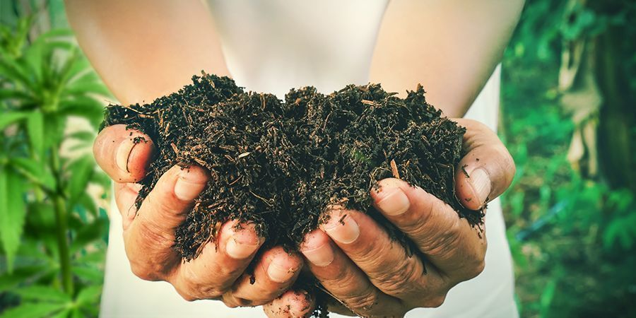 HOW TO MAKE YOUR OWN COMPOST FOR CANNABIS PLANTS