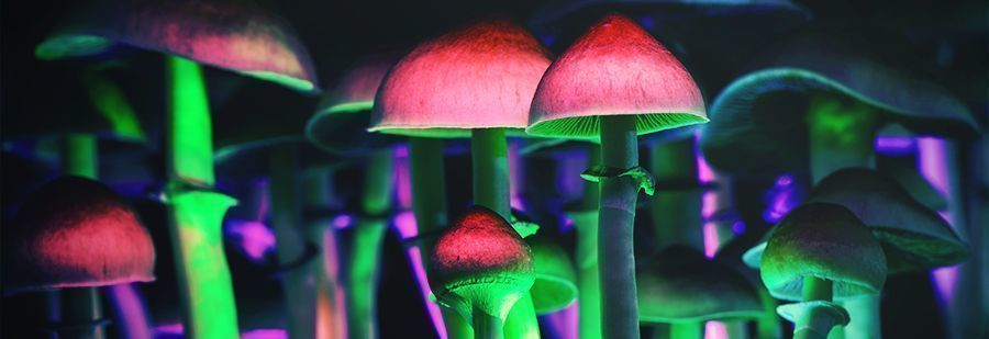 r/shrooms: Your Go-To Subreddit For Psilocybin Information