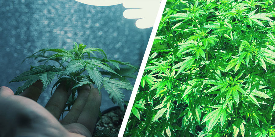 What Is Micro-Growing? What's the Difference?