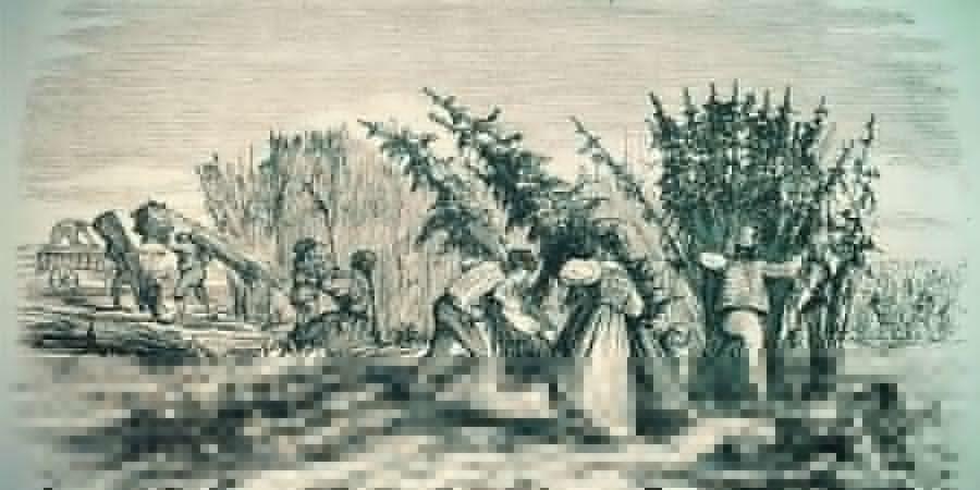 History Of Cannabis