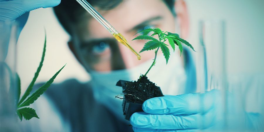 Factors That Could Affect Cannabis Flowering: Exogenous Chemicals