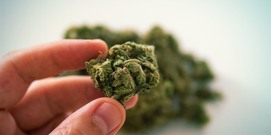 How To Detect Cannabis Contaminants: Feel Your Cannabis Buds
