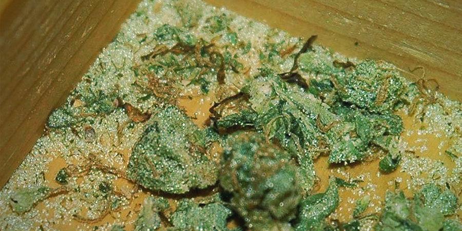 Cannabis Contaminants: Glass