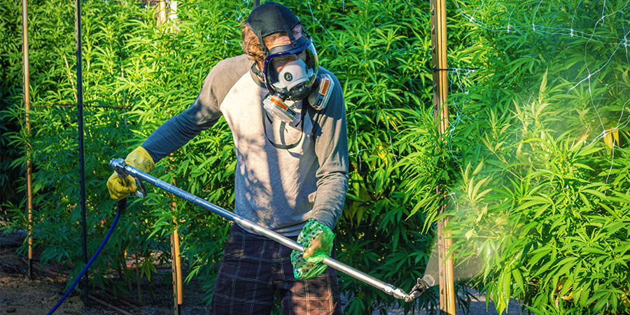 Cannabis Contaminants: Industrial Pesticides or Fertilisers