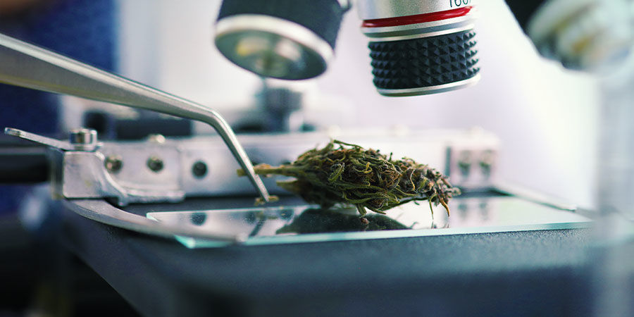 Cannabis Contaminants: Lead