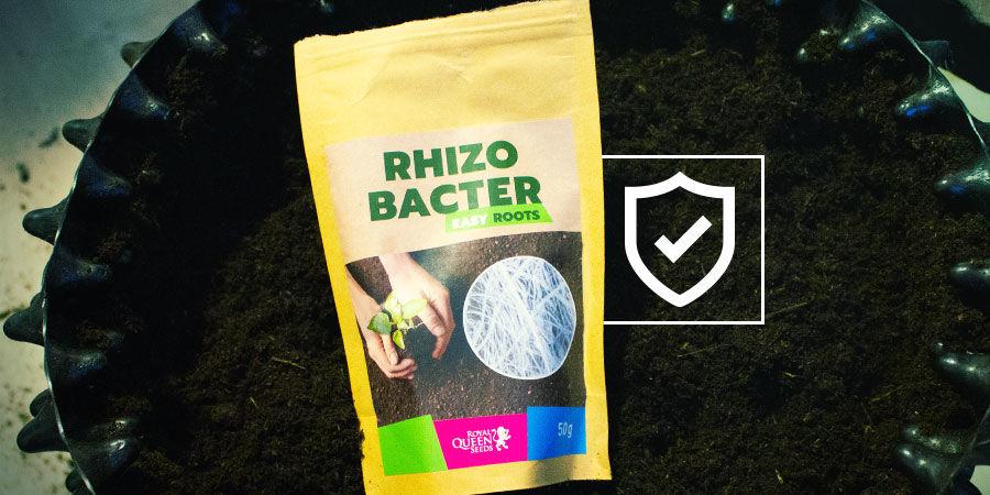 How Do Rhizobacteria Protect Cannabis Plants?