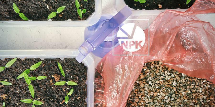 Growing Peppers For Beginners: Fertilise Seedlings