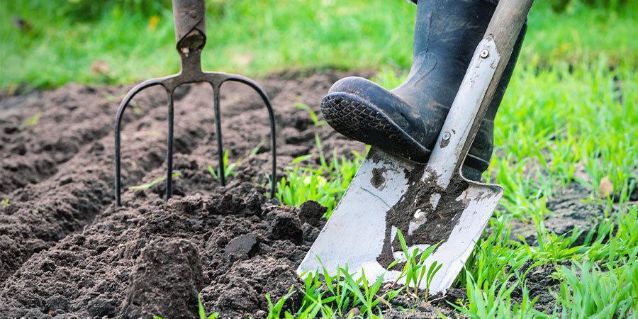 Growing Peppers For Beginners: Prepare Grow Site