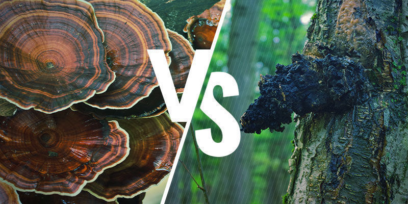 How Reishi Compare to Other Adaptogenic Mushrooms