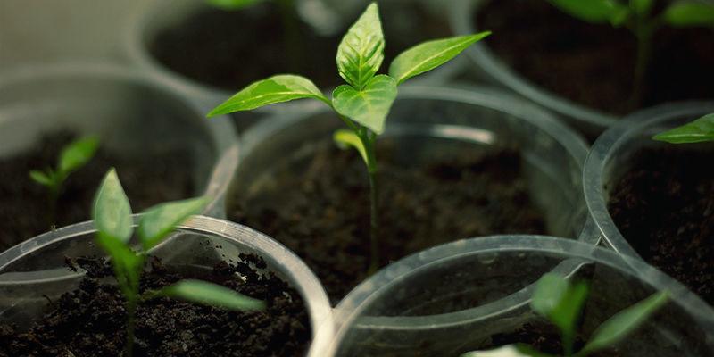 Growing Bhut Jolokia: Equipment & Supplies