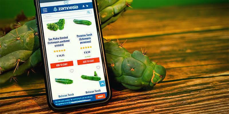 Where To Buy Echinopsis Zamnesiana