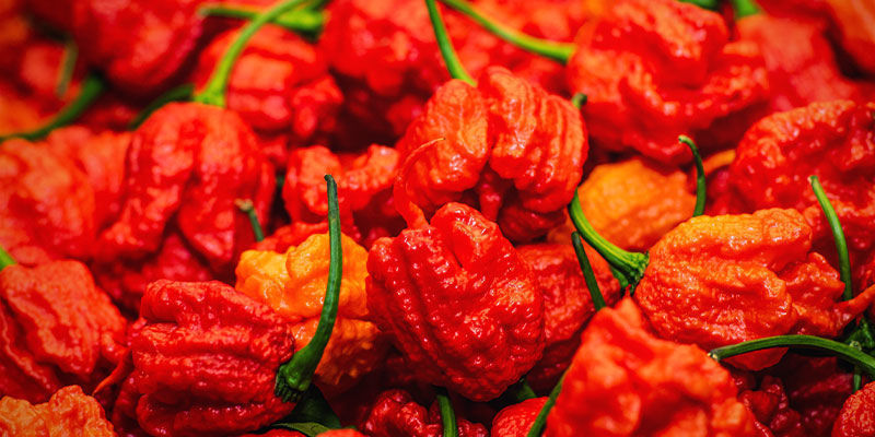 Hottest Peppers: Infinity Pepper
