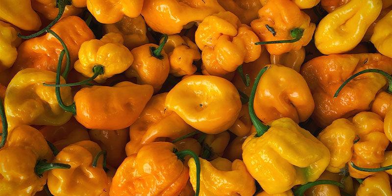 Hottest Peppers: 7 Pot Brain Strain