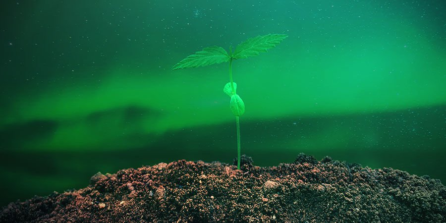 HOW TO GROW NORTHERN LIGHTS