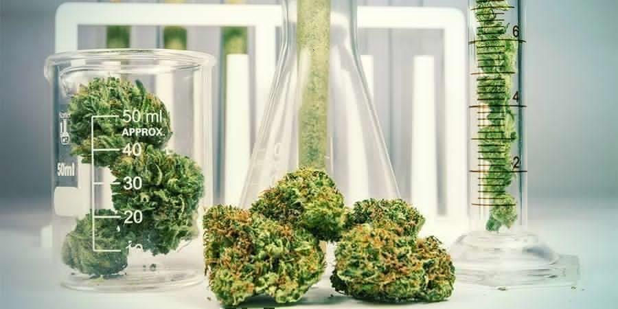Cannabis: A Chemically Complex Herb