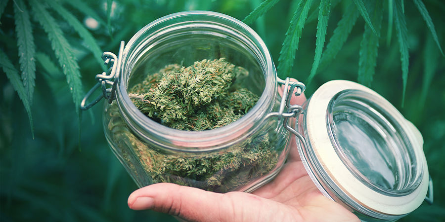 What Else Do You Need to Know About autoflowering cannabis strains?