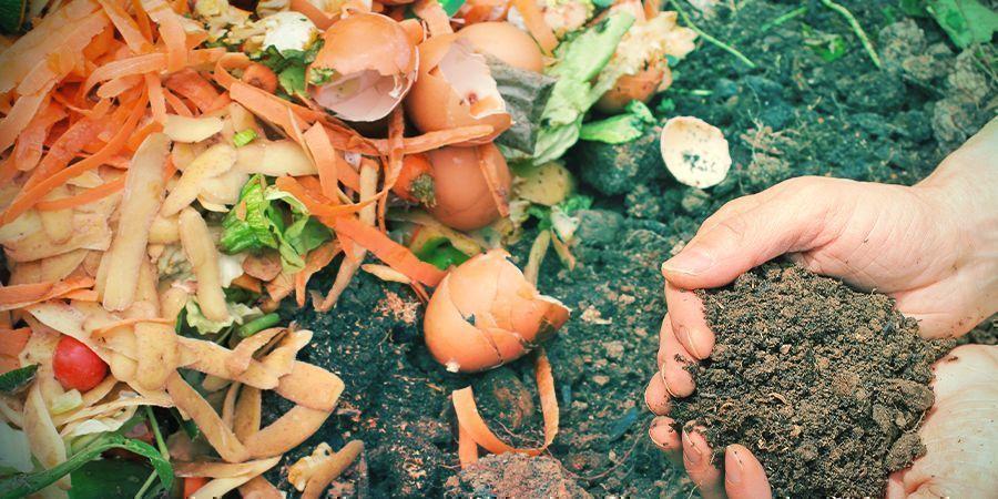 Adjusting Soil pH When Growing Organically