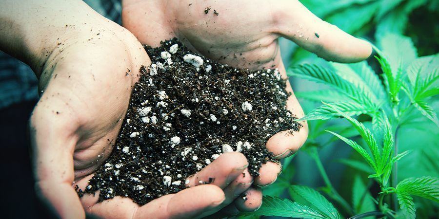 Adjusting The pH Level Of Your Soil