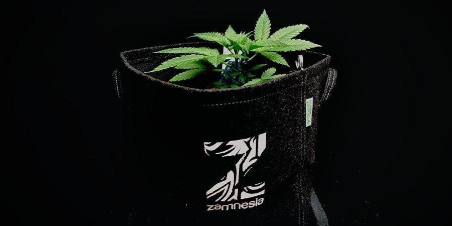 Use Fabric Grow Pots