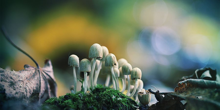 The best time to look for magic mushrooms