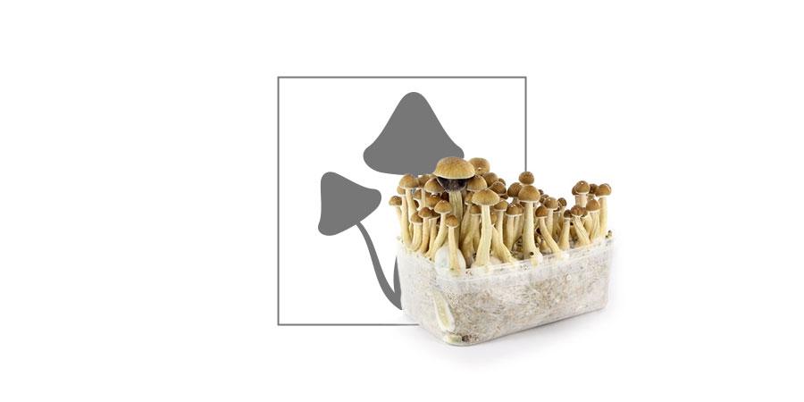 Top 10 Magic Mushrooms