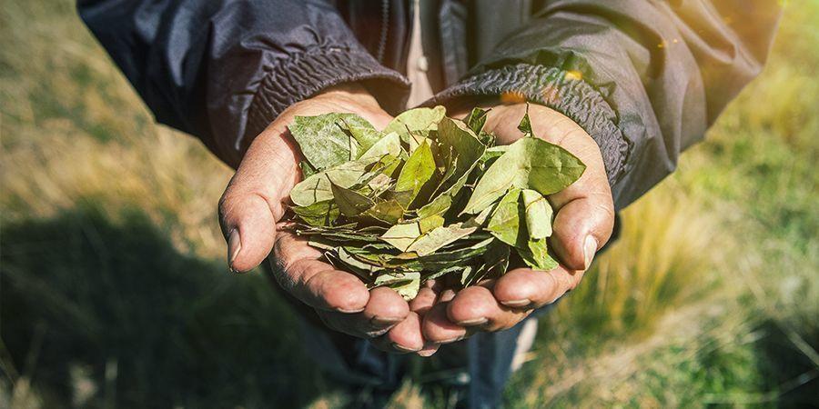 Grower Impact War On Drugs