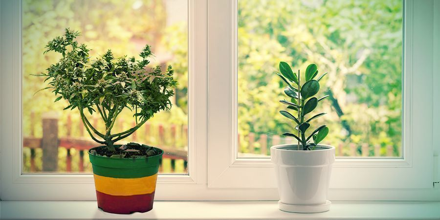 Windowsill Growing