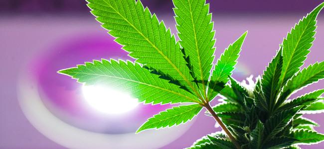 Lighting Cannabis