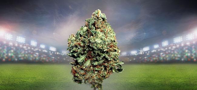 Bubba Kush Cannabis