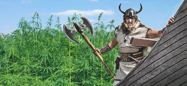 Viking Cannabis