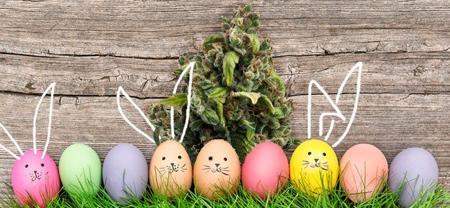 Candy Kush Royal Queens Seeds Easter