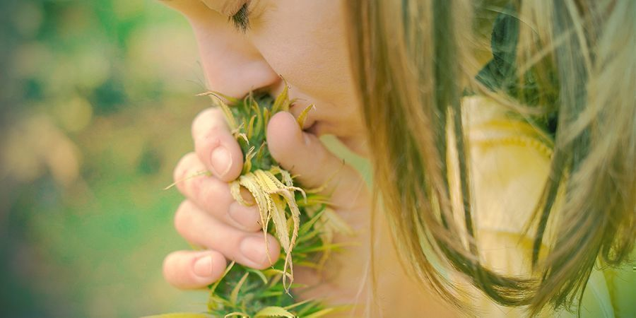 Cannabis - Smell It!