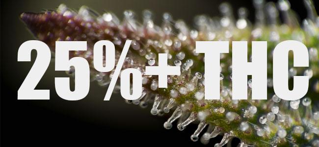 25%+ THC Gorilla Glue