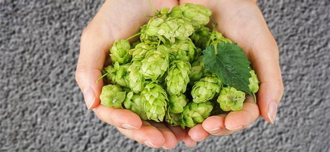 Home Beer Brewing Hops