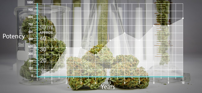 Marijuana Today Is More Potent Than In The Past
