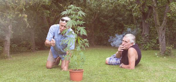Environment cannabis