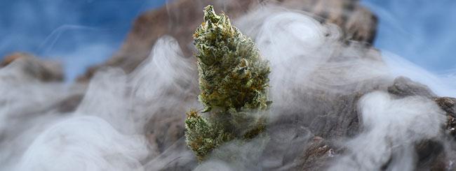 Sacred cannabis