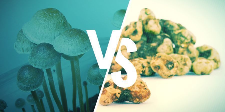 What's The Difference Between Magic Truffles And Magic Mushrooms?