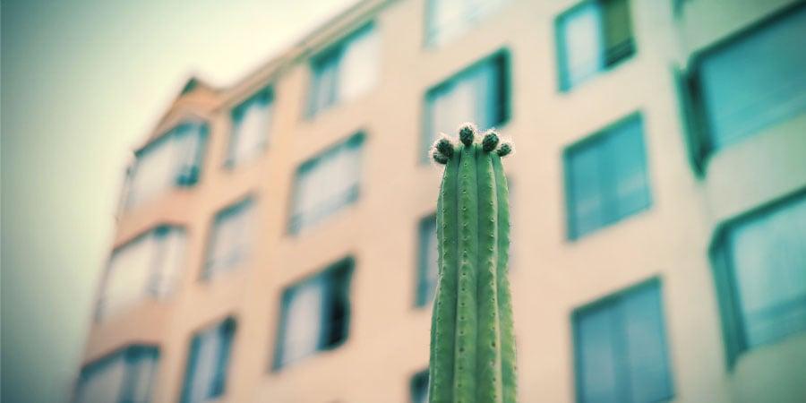 Growing San Pedro