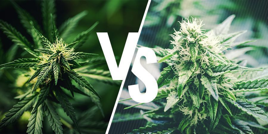 What's The Difference Between Hemp And Cannabis?
