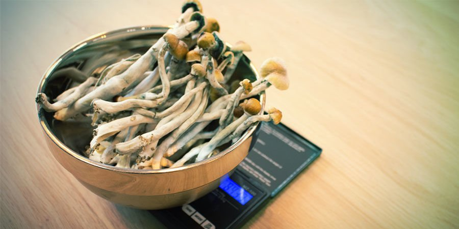 HOW TO WEIGH MAGIC MUSHROOMS CORRECTLY