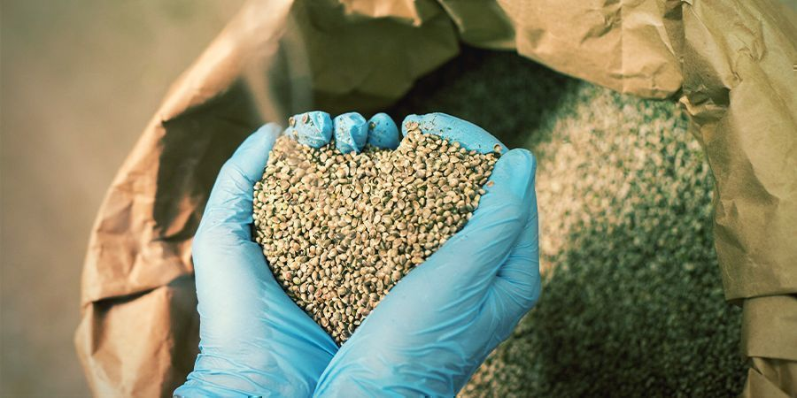 How Are Hemp Seeds Processed and Sold?