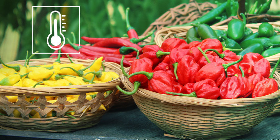 The Scoville Scale Explained
