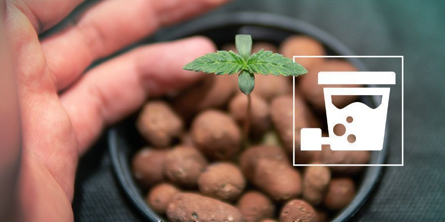 How To Set Up A DWC System