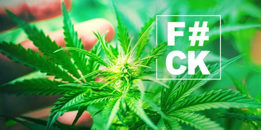 Fimming Cannabis: Everything You Need to Know