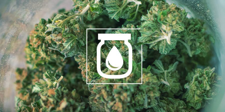 Water Curing Cannabis: What It Is And How to Do It