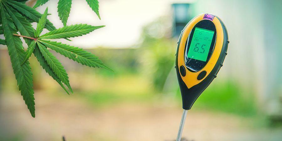 Growing Cannabis In Rockwool: VEGETATION