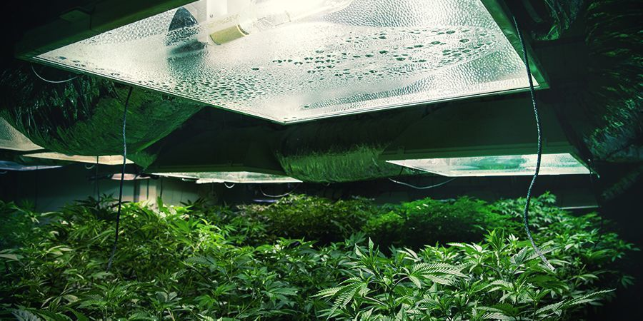 BEST GROW ROOM CIRCUMSTANCES FOR THE FLOWERING PERIOD
