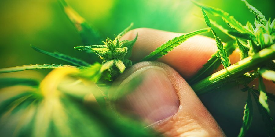 6  Sex Of Plants