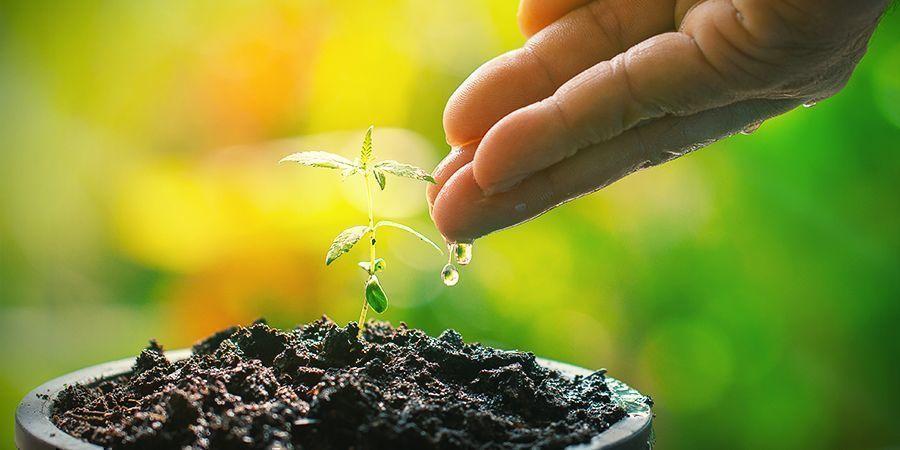 How Often Do Seedlings Need Water